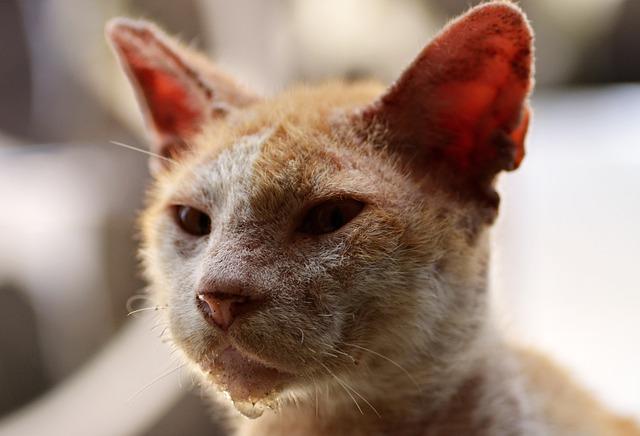 gato enfermedad
